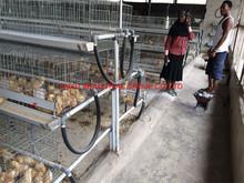 TAIYU Farm Cage for Egg Chick