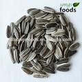 atacado nomes de sementes comestíveis