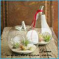 sıcak satış terrario cam vazo resimleri