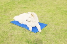 wholesale cooling pet dog sleeping bed with factory price
