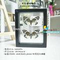 Fousen(039) natureza& art vidros duplos enquadrado borboleta preta moldura de madeira