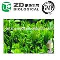 الصين الشاي الأخضر يترك استخراج مسحوق الدهون الموقد