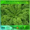 organic kale powder / organic kale extract powder / dried kale