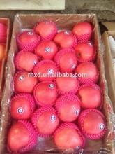 best fresh fuji apple exporter in China