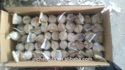 chinese fresh garlic price from shandong