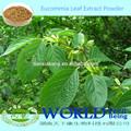 Fabbrica 100% naturale eucommia estratto di foglie verde in polvere estratto di caffè basso prezzo pura 5% clorogenico- 98% acido clorogenico