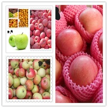 top fresh delicious apple fruit on hot sale with best price