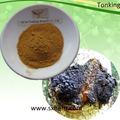 Obliquo inonotus estratto/polisaccaridi il 10-30% e 2% triterpeniche