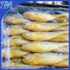 Hot sale in Korea market frozen yellow croaker fish