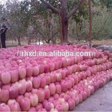 Yantai best price fresh fuji apple exporter in china