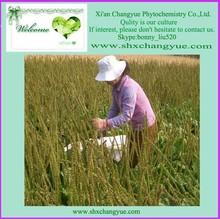 manufacture price Plantain Seed P.E.
