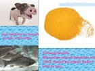 Corn Protein Powder Type and Cattle,Chicken,Dog,Fish,Horse,Pig Use yellow corn chicken feed