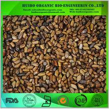 Semillas de Cassia / Cassia tora semillas extracto