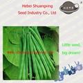 Semillas de frijol de híbrido SX de semillas de frijol No.1407