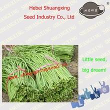 Hybrid seeds SX Long Bean Seeds No.1413
