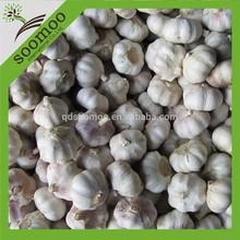 fresh chinese garlic price 2013