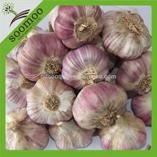 new crop fresh purple garlic