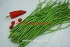 Long Bean Seeds Cowpea Bean Seeds SX Cowpea Seeds No.1402