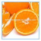 bulk fresh navel orange fruit/fresh navel orange to usa