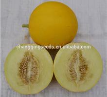 """QME244""hybrid high sugar content milky white flesh melon seeds in vegetable seeds"