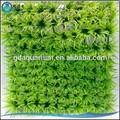 รูปแบบที่สวยงาม5104ชื่อของพืชพลาสติกพิพิธภัณฑ์สัตว์น้ำและพืชน้ำ