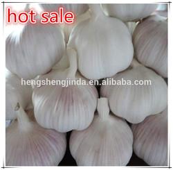 china garlic supplier/china export garlic/wholesale garlic to pakistan