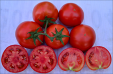 QTM 307 hybrid high production tomato seeds in vegetable seeds