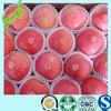 bulk fresh fruit apple/fuji apple to usa/china apple price