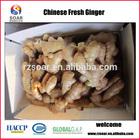 China dry ginger price