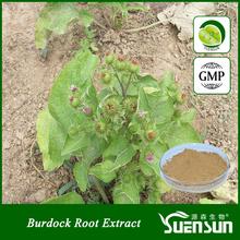 GMP factory burdock extract powder arctiin burdock root extract