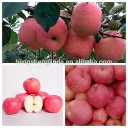 fresh red fuji apple/names all fruits/ china fresh red fruit