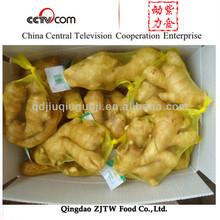 Market price for ginger,ginger price,fresh ginger