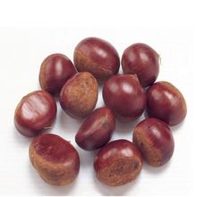 Hot selling fresh chestnut