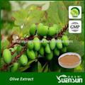 alta qualidade de oliva extrato antioxidante hidroxitirosol