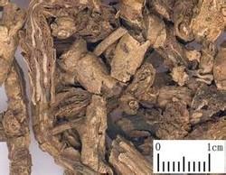 Picrorhiza kurroa root EXTRACT(hight pure extract)