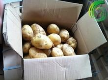 2014 cosecha fresca de color amarillo holanda papa semillas de gran tamaño de la ronda de papa patata