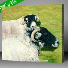 two white sheeps digital photo printing