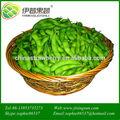 Venta caliente verde soja frozen verduras