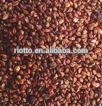 grape seed extract softgel capsule