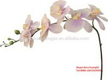 Sjh122528 orquídeas artificiais atacado única haste phalaenopsis corte orquídeas phalaenopsis