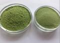 Poudre de jus d'herbe de blé 100% naturel jas, de l'union européenne, usda organic certificat