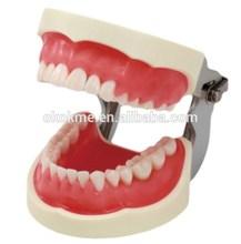 high grade dental care model ,medical tooth teaching model standard transparent tooth model