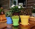 colorato piante grasse vaso da fiori in plastica pentola semina giardiniere