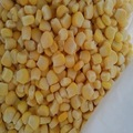 Nueva cosecha congelados de maíz