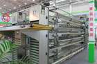 Chicken used automatic galvanized battery chicken cages laying hen/layer/egg chicken