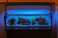 Looking for distributor hot sale good quality 2012 best ebay led aquarium light