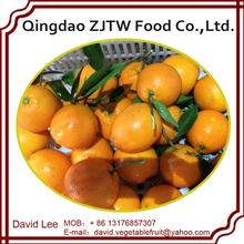 Best Quality Fresh Orange For Sale In 15Kg Carton
