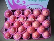 Yantai Fresh Red Fuji Apple 2014 crop