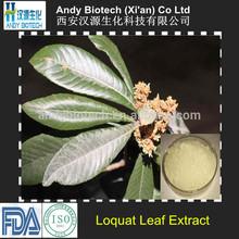 Hot Sale Natural 25% Ursolic Acid High Quality Loquat Leaf Extract