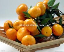 2014 new honey orange